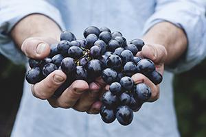 grapes-690230_1280-thumb.jpg